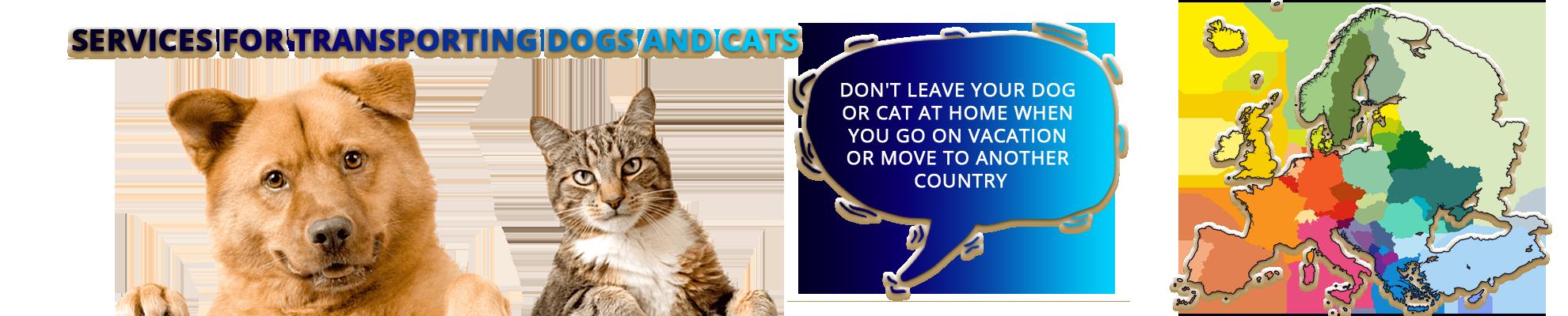 Servicii transport caini si pisici EN